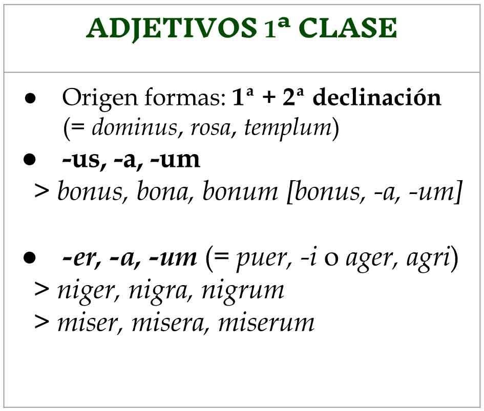 primera-clase-adjetivos-en-latín-clasificación-enunciados-declinaciones